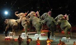 Правительство одобрило запрет использовать в цирке диких животных