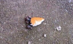 Skat, gliemeži saskrējuši maizi ēst!
