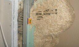 Mājas sienā atrod milzīgu lapseņu pūzni