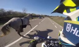 Video: Beļģijā motociklists izglābj pa šoseju bēgošu zirgu