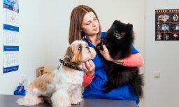 Mājdzīvnieka sterilizācija var pasargāt mīluli no saslimšanām