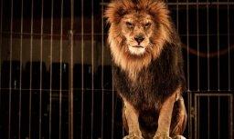 ПВС: Несмотря на запрет, дикие животные по-прежнему выступают в цирках