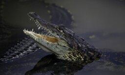 Юноша прыгнул в реку с крокодилами, чтобы впечатлить иностранную туристку