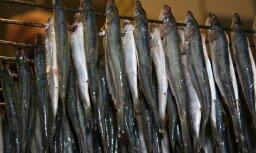 Konkurences dēļ zivrūpnieki samazinājuši produkcijas cenas zem pašizmaksas