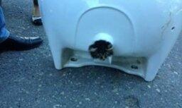 ВИДЕО. Как пожарные в Саулкрасты спасали застрявшего в раковине котенка