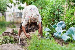 No vecmāmiņas pūra lādes: veselības un skaistumkopšanas padomi vasarai