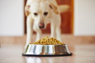'Dogo' sāga: Veterinārārsti pieļauj, ka suņu slimību varētu būt izraisījuši pesticīdi