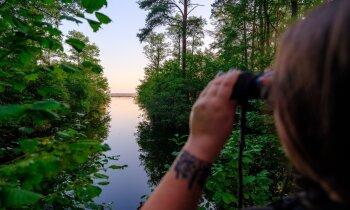 Bezmaksas meditācija latvietim – putnu vērošana