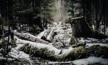 Ziemassvētku kauju simtgade. 3. daļa: Strupceļš