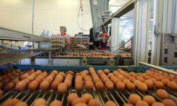 'Balticovo' skandāls: kā slikti vistu turēšanas apstākļi ietekmē olu kvalitāti