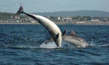 Aberdīna Skotijā - granīta valstība ar naftu, viskiju un 'urbāniem delfīniem'