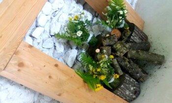 Ugunskura un kamīna alternatīva: interesants svētku dekors