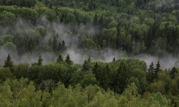 Vēja parki Latvijā: tālāk no sabiedrības acīm – valsts mežos