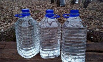 Netipiski agri sākusies kļavu sulu sezona