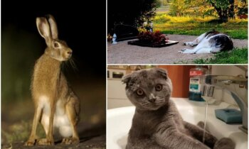 Černobiļas zvēri, izlietnē sēdošais kaķis un suns pie kapa – gada aktualitātes dzīvnieku pasaulē