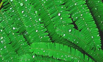 Jāņu rītā Kurzemē dažviet līs