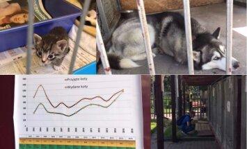 700 suņu un kaķi, ko ātri adoptē: ikdiena vecākajā dzīvnieku patversmē Polijā