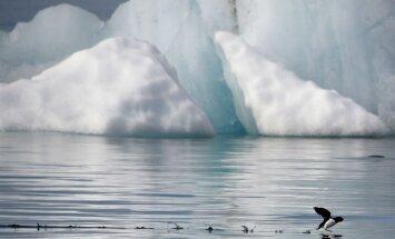 Ledus kušana Arktikā sasniegusi nepieredzētus apmērus