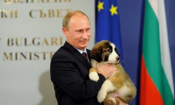 Японцы подарили Путину щенка в обмен на диалог по Курилам