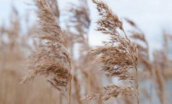 Sestdiena būs vējaina; gaiss iesils līdz +15 grādiem
