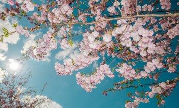 В последний день апреля будет солнечно и почти без осадков