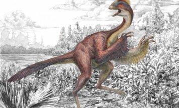 'Cālēns no elles': atrasta jauna dinozauru suga
