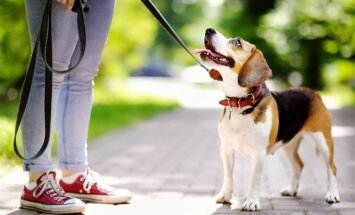 Rīgas ieņēmumi no suņu turēšanas nodevas pērn auguši divarpus reizes