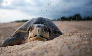 ASV policija aiztur bruņurupuci