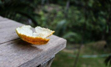 Miza kā sēklu pods un ne tikai: apelsīna izmantošana dārza darbos