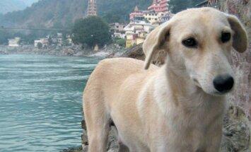 Baltā sieviete, indietis un duksis – Agates stāsts par mājdzīvniekiem Indijā