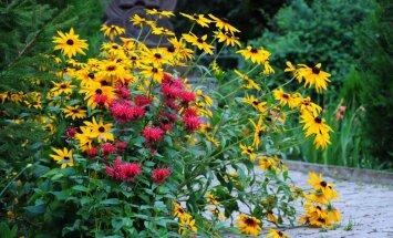 Praktiski ieteikumi, kā dārzā ilgāk saglabāt krāšņumu
