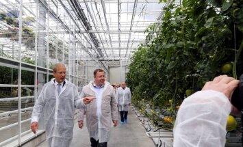 'Getliņi Eko' plāno ražot arī marinētus gurķus