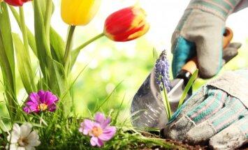Tik dažādie dārza darbu kalendāri: kā tos atšķirt?