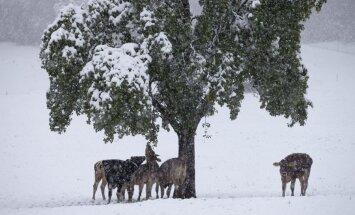 Ciemats Spānijā jau 29 dienas sniega dēļ norobežots no ārpasaules