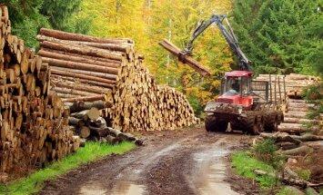 Carnikavas pašvaldība sola piesaistīt 205 darbavietas mežā, vēsta raidījums
