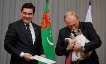 ФОТО, ВИДЕО: Президент Туркмении подарил Путину щенка алабая
