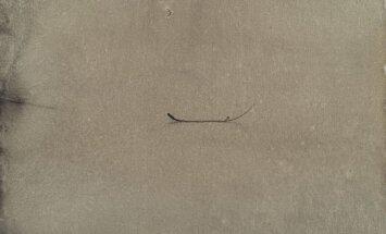 Tīģera zīmējumi. Par Ilmāra Blumberga darbu izstādi fon Stricka villā