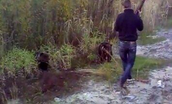 Video: Vīrietis Krievijā ar cauruli nogalina lācēnu