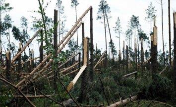 Video: Postošās vētrās Polijā nolīdzināts mežs un gājuši bojā cilvēki