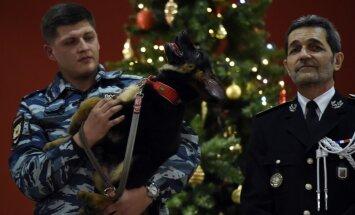 Foto: Krievija Francijai nogalinātā suņa vietā pasniedz kucēnu Dobriņu