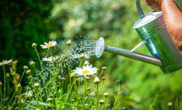 Brīvdienu dārzs – kā rīkoties, ja ikdienas laistīšanai nepietiek laika