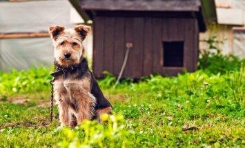 Civilizētā Eiropā tā nedara: patversmes vērtē, vai suni vajadzētu turēt pie ķēdes