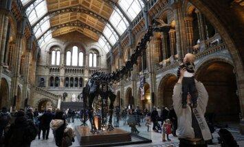 Tūristu iemīļotais dinozaurs Dipijs pēc 112 gadiem pamet Londonu