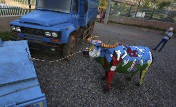 Foto: Ķīnā aizvadīts bifeļu body-art konkurss