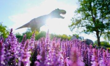 Foto: Lāzeršautuve, dinozauru atrakcijas pieaugušajiem – Avārijas brigādes parka jaunumi šosezon