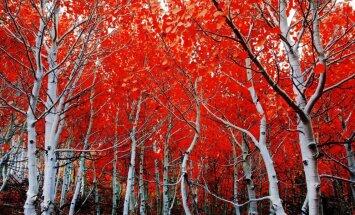 Foto: Neatkārtojamās dabas krāsas rudens sezonā