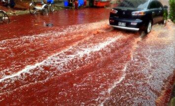 Upurēšanas svētku rituālās kaušanas Dakas ielas pārvērš asiņu upēs
