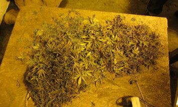 Par narkotiku glabāšanu un pārdošanu Zemgalē oktobrī aiztur septiņus cilvēkus