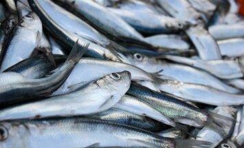 Skultes zvejnieku uzņēmums 'Varita' sācis eksportu uz Dāniju