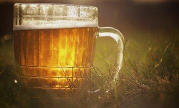 Сам себе пивовар: готовим на Лиго домашнее лимонно-медовое пиво